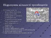 Підрахунок кількості тромбоцитів У мазку крові під іммерсійних об'єктивом під...