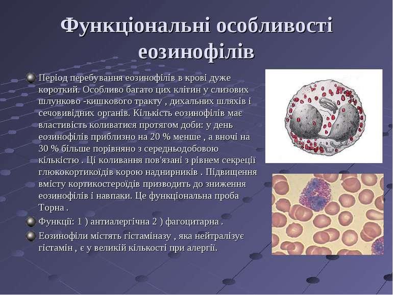 Функціональні особливості еозинофілів Період перебування еозинофілів в крові ...