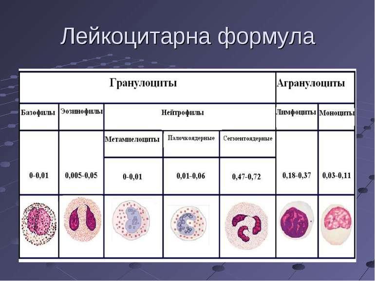 Лейкоцитарна формула