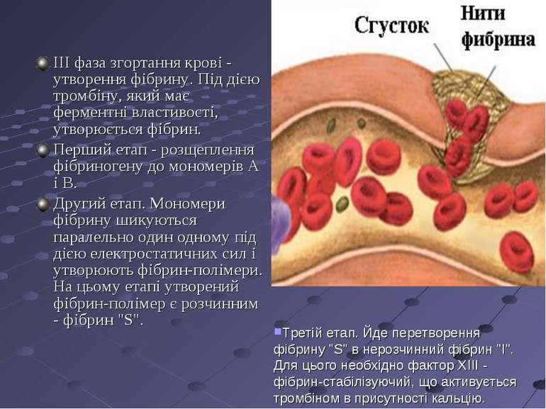 ІІІ фаза згортання крові - утворення фібрину. Під дією тромбіну, який має фер...