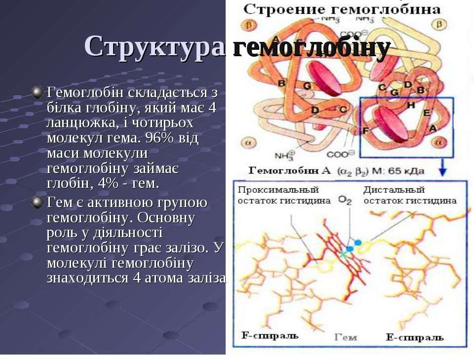 Структура гемоглобіну Гемоглобін складається з білка глобіну, який має 4 ланц...