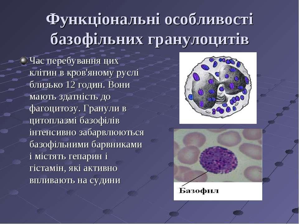 Функціональні особливості базофільних гранулоцитів Час перебування цих клітин...