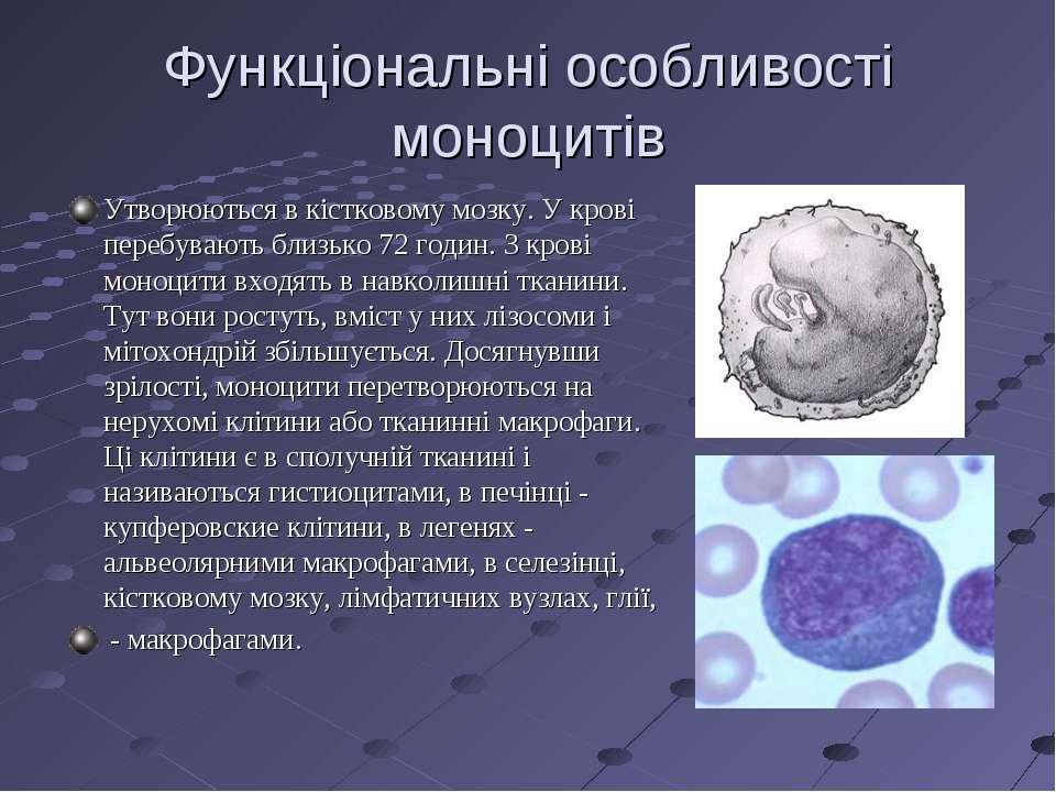 Функціональні особливості моноцитів Утворюються в кістковому мозку. У крові п...