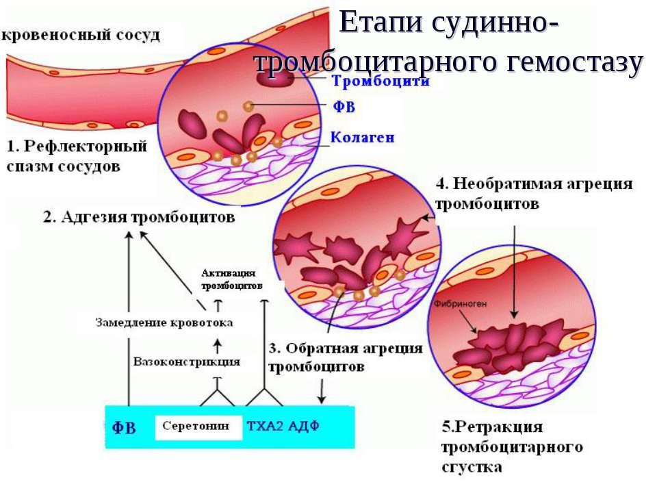 Етапи судинно-тромбоцитарного гемостазу