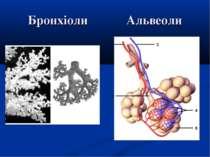 Бронхіоли Альвеоли