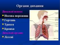 Органи дихання Дихальні шляхи: Носова порожина Гортань Трахея Бронхи Дихальні...
