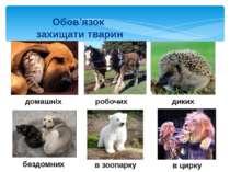 Обов'язок захищати тварин домашніх диких в зоопарку бездомних в цирку робочих