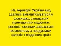 На території України вид здатний акліматизуватися у сховищах, складських прим...