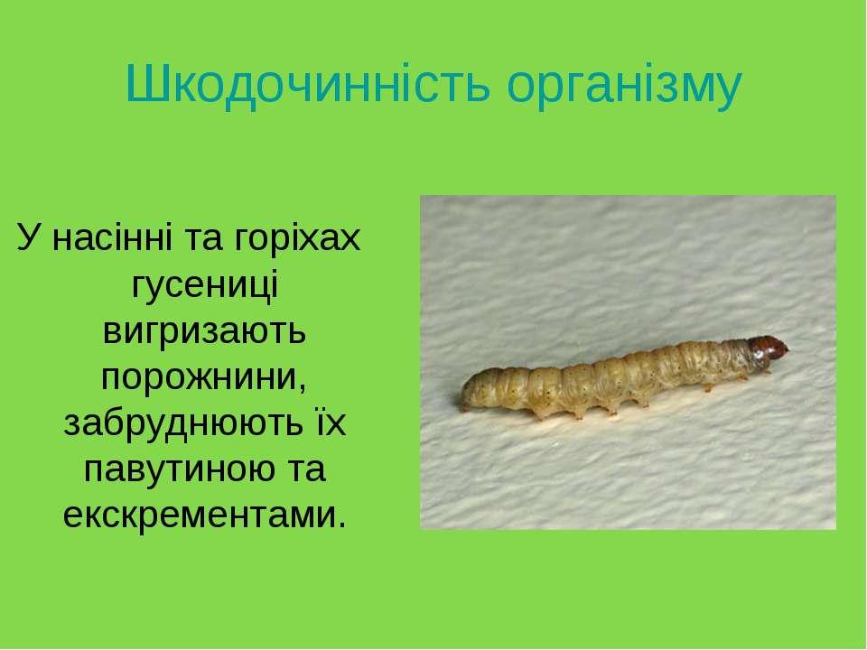 Шкодочинність організму У насінні та горіхах гусениці вигризають порожнини, з...