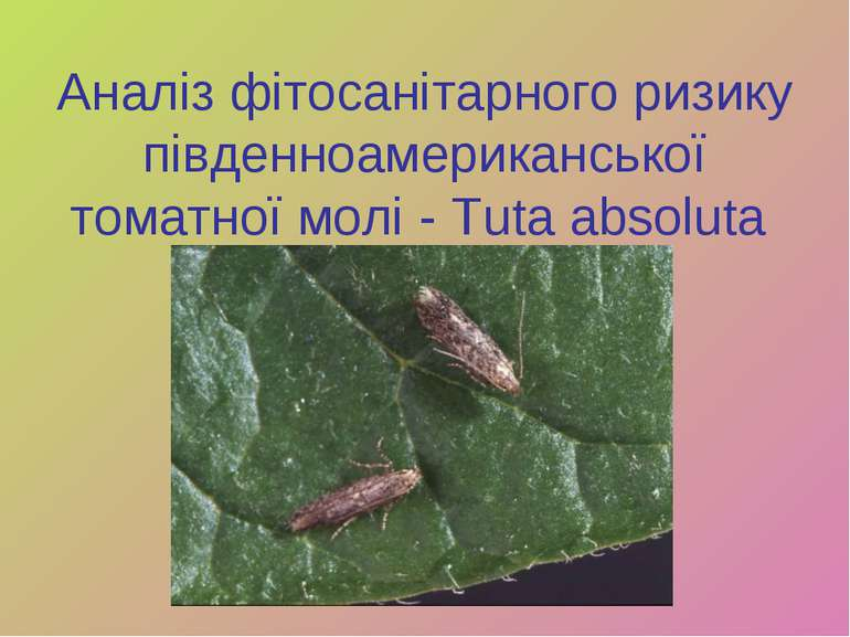 Аналіз фітосанітарного ризику південноамериканської томатної молі - Tuta abso...