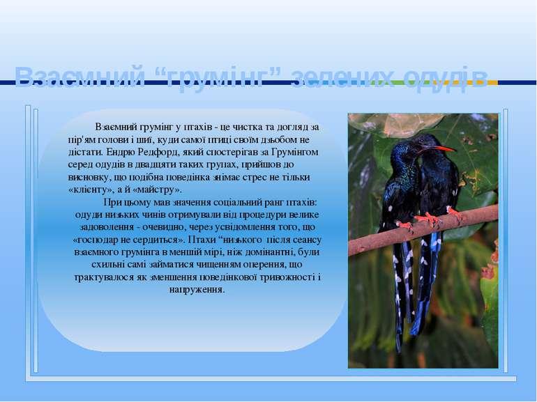 Взаємний грумінг у птахів - це чистка та догляд за пір'ям голови і шиї, куди ...