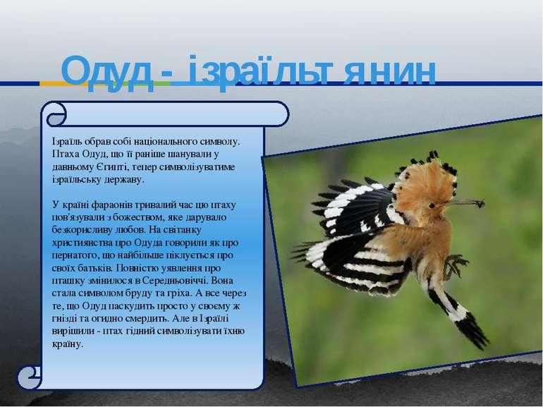 Одуд - ізраїльтянин Ізраїль обрав собі національного символу. Птаха Одуд, що ...