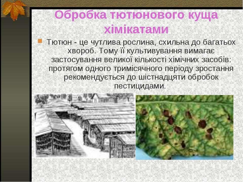 Обробка тютюнового куща хімікатами Тютюн - це чутлива рослина, схильна до баг...