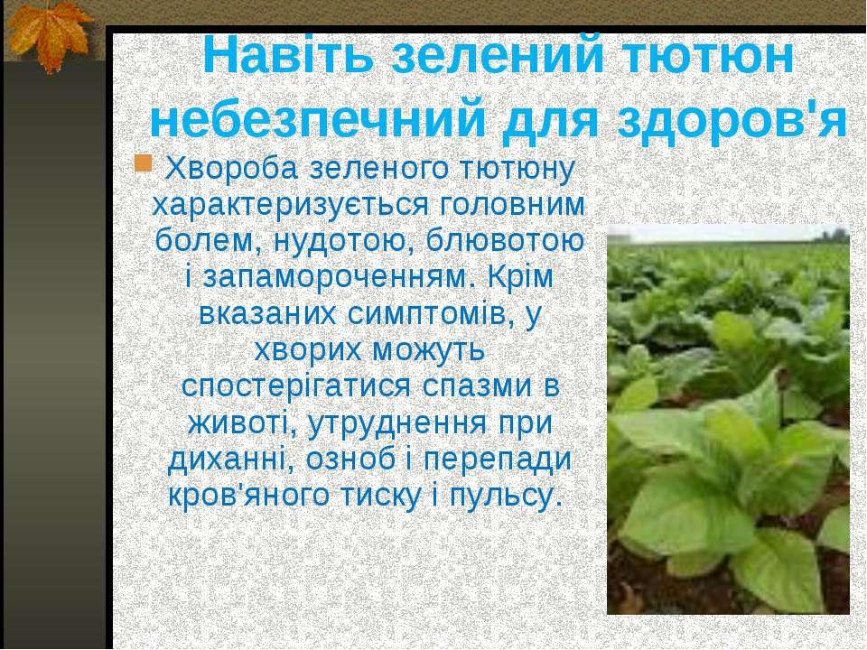 Навіть зелений тютюн небезпечний для здоров'я Хвороба зеленого тютюну характе...