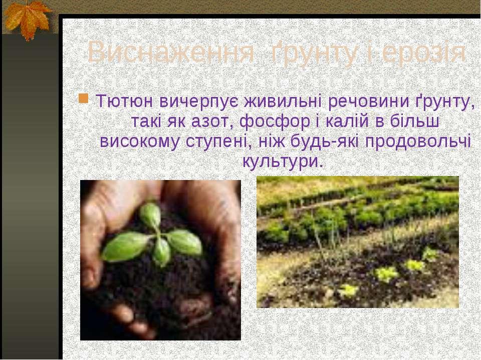Виснаження ґрунту і ерозія Тютюн вичерпує живильні речовини ґрунту, такі як ...
