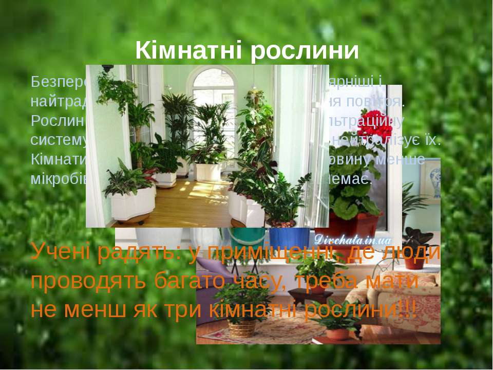 Кімнатні рослини Безперечно, кімнатні рослини найпопулярніші і найтрадиційніш...