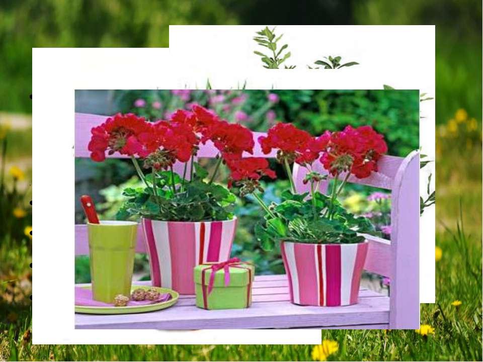 Вибирати домашні квіти варто не тільки за красою, але й за корисністю. У місь...