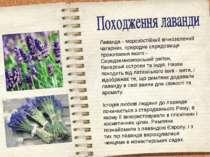 Лаванда - морозостійкий вічнозелений чагарник, природне середовище проживання...