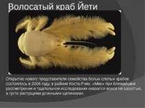 Волосатый краб Йети Открытие нового представителя семейства белых слепых краб...