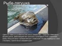 Рыба-лягушка Одна из главных особенностей этого семейства – грудные плавники ...