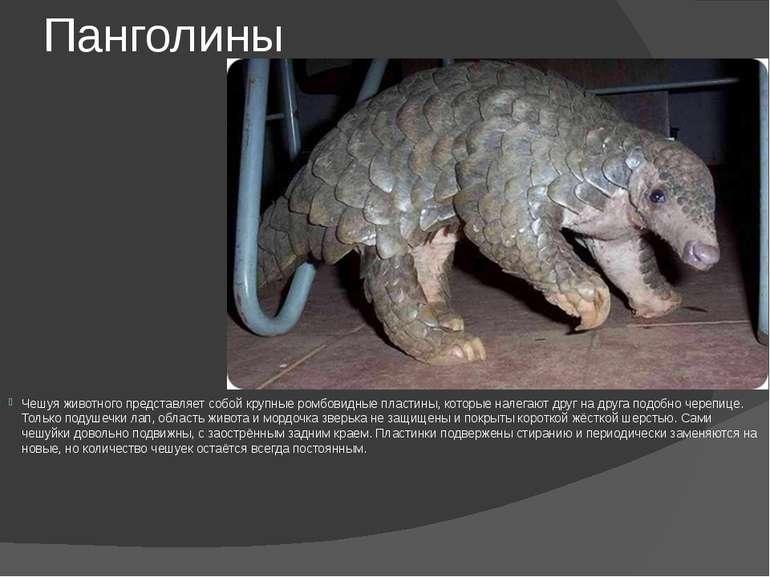Панголины Чешуя животного представляет собой крупные ромбовидные пластины, ко...
