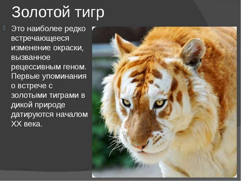 Золотой тигр Это наиболее редко встречающееся изменение окраски, вызванное ре...