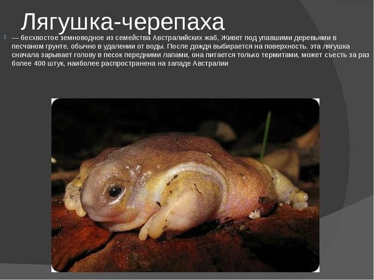 Лягушка-черепаха — бесхвостое земноводное из семейства Австралийских жаб, Жив...
