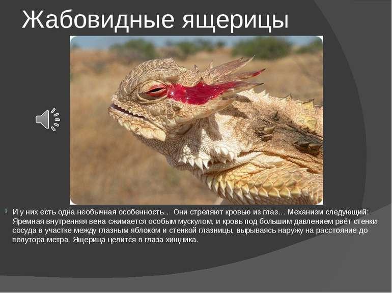 Жабовидные ящерицы И у них есть одна необычная особенность… Они стреляют кров...