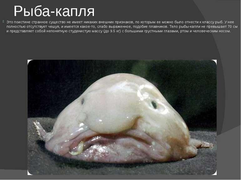 Рыба-капля Это поистине странное существо не имеет никаких внешних признаков,...