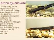 Тритон дунайський Ареал у загальних рисах збігається з басейном Дунаю. Вид на...