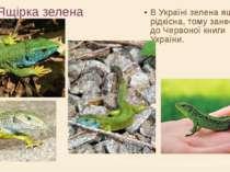 Ящірка зелена В Україні зелена ящірка рідкісна, тому занесена до Червоної кни...