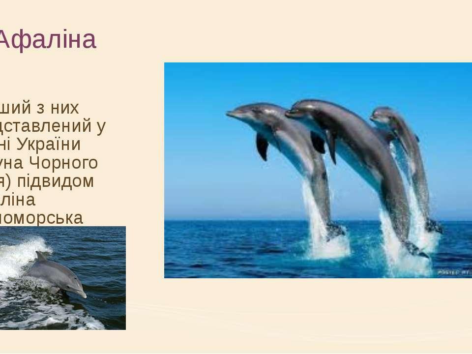 Афаліна Перший з них представлений у фауні України (фауна Чорного моря) підви...