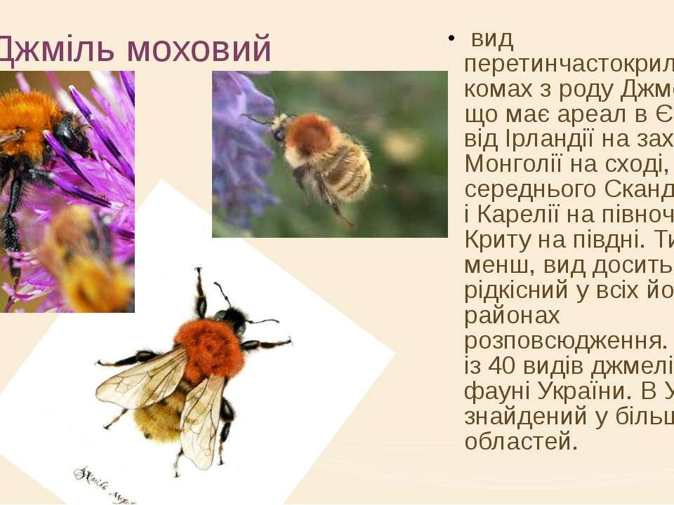 Джміль моховий вид перетинчастокрилих комах з роду Джмелі, що має ареал в Євр...