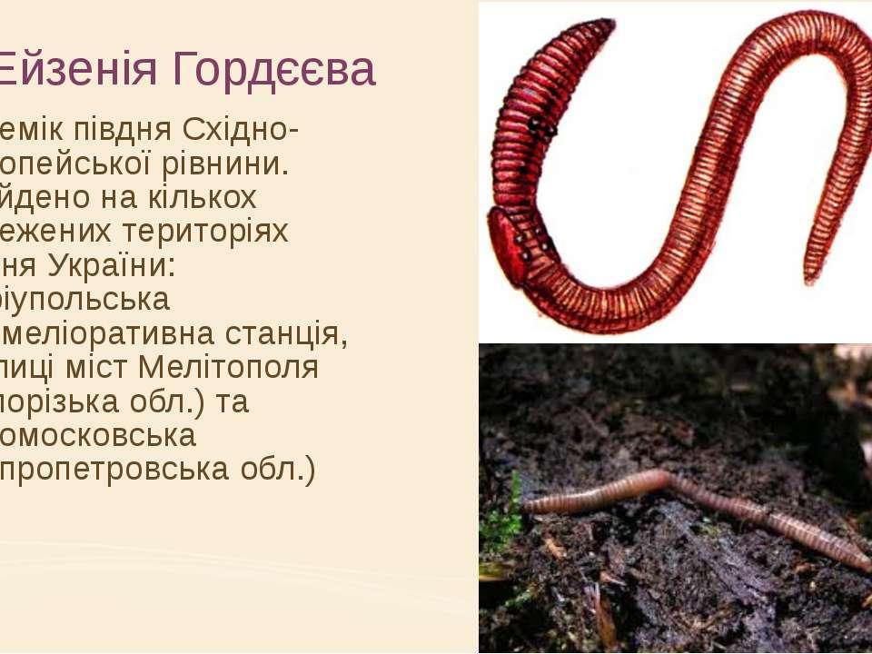 Ейзенія Гордєєва Ендемік півдня Східно-Європейської рівнини. Знайдено на кіль...