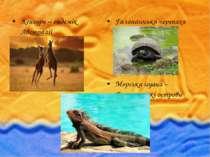 Кенгуру – ендемік Австралії Галапагоська черепаха Морська ігуана – Галапагось...