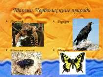 Тварини Червоних книг природи Леопард Бджола - тесля Беркут Махаон