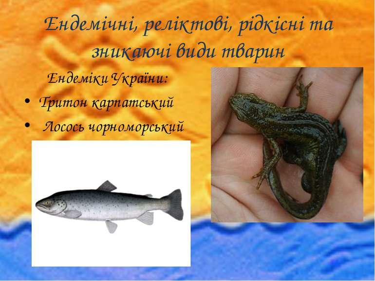 Ендемічні, реліктові, рідкісні та зникаючі види тварин Ендеміки України: Трит...