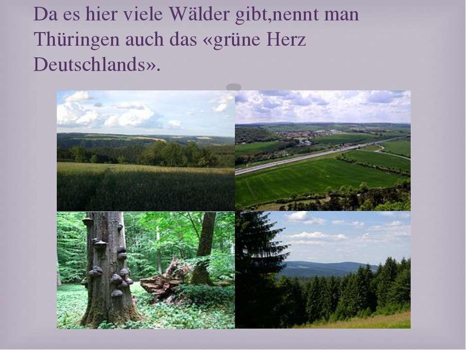 Da es hier viele Wälder gibt,nennt man Thüringen auch das «grüne Herz Deutsch...