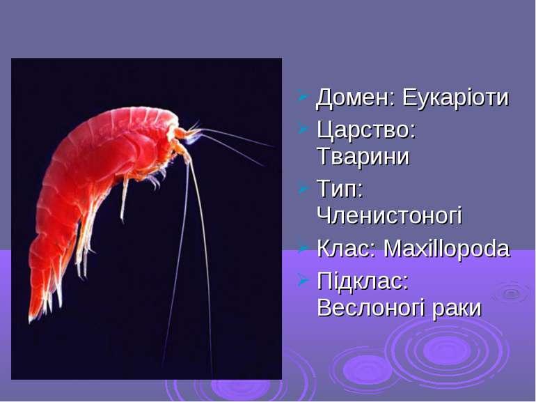 Домен: Еукаріоти Царство: Тварини Тип: Членистоногі Клас: Maxillopoda Підклас...