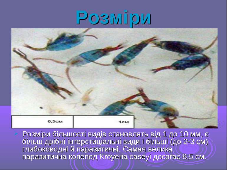 Розміри Розміри більшості видів становлять від 1 до 10 мм, є більш дрібні інт...