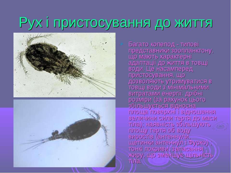 Рух і пристосування до життя Багато копепод - типові представники зоопланктон...