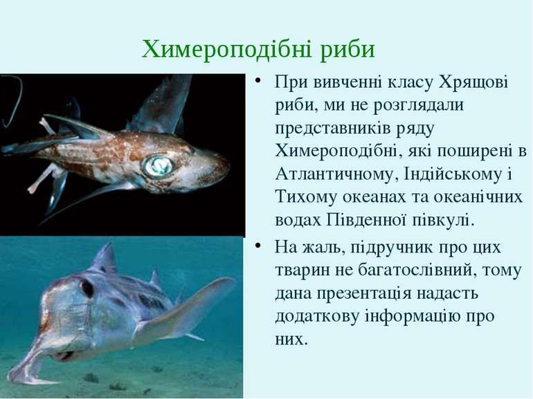 При вивченні класу Хрящові риби, ми не розглядали представників ряду Химеропо...