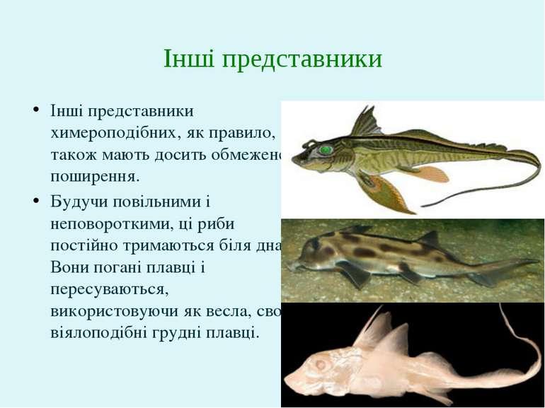 Інші представники химероподібних, як правило, також мають досить обмежене пош...