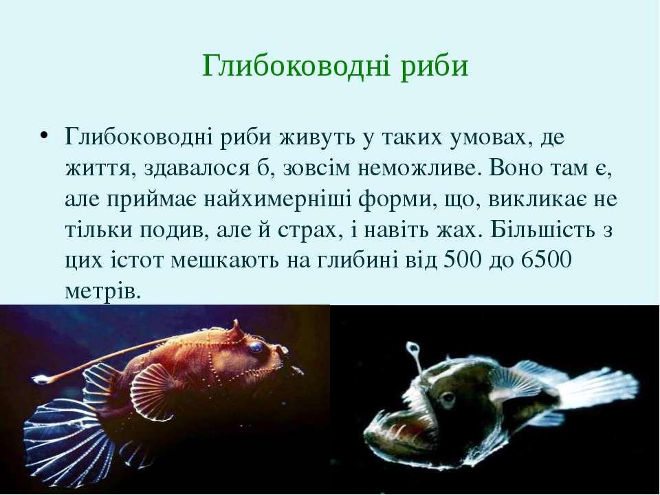 Глибоководні риби живуть у таких умовах, де життя, здавалося б, зовсім неможл...