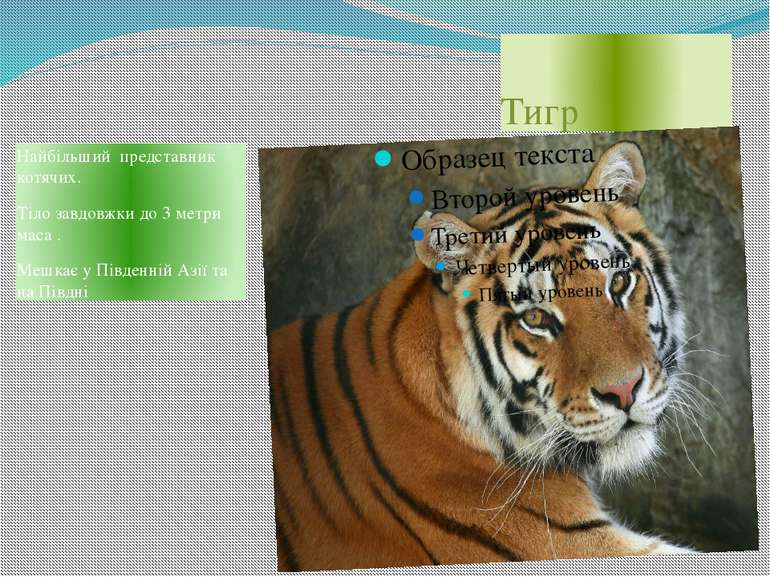 Тигр Найбільший представник котячих. Тіло завдовжки до 3 метри маса . Мешкає ...