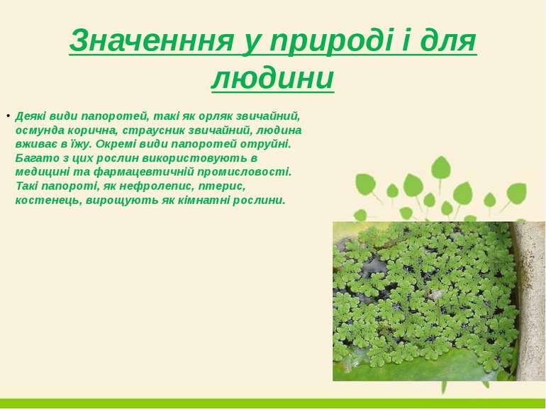 Значенння у природі і для людини Деякі види папоротей, такі як орляк звичайни...