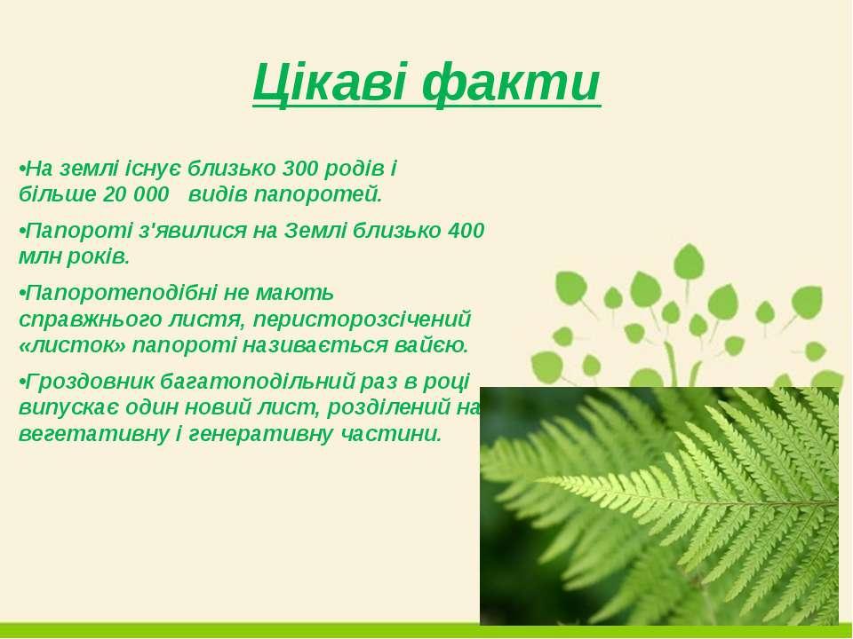 Цікаві факти •На землі існує близько 300 родів і більше 20 000 видів папороте...