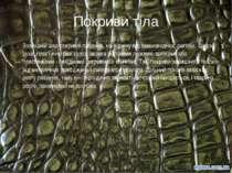 Покриви тіла Зовнішній шар покривів плазунів, на відміну від земноводних, рог...