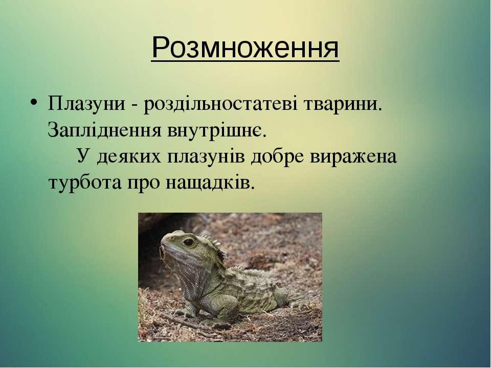 Розмноження Плазуни - роздільностатеві тварини. Запліднення внутрішнє.  У...