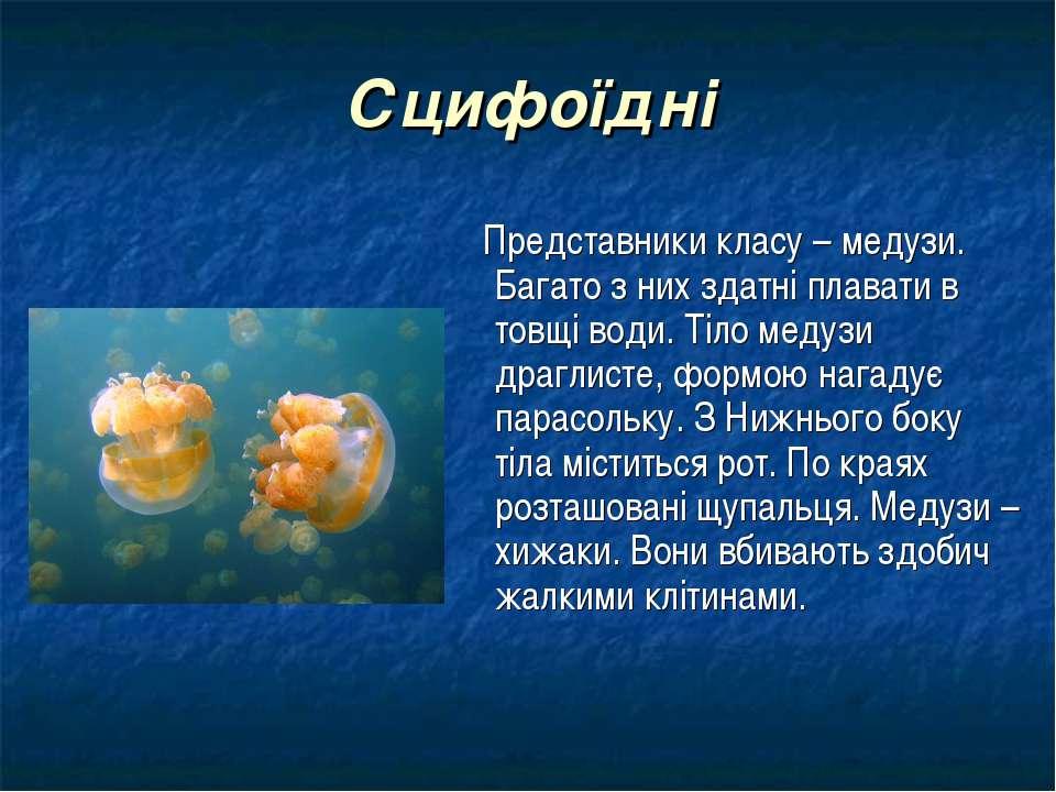 Сцифоїдні Представники класу – медузи. Багато з них здатні плавати в товщі во...